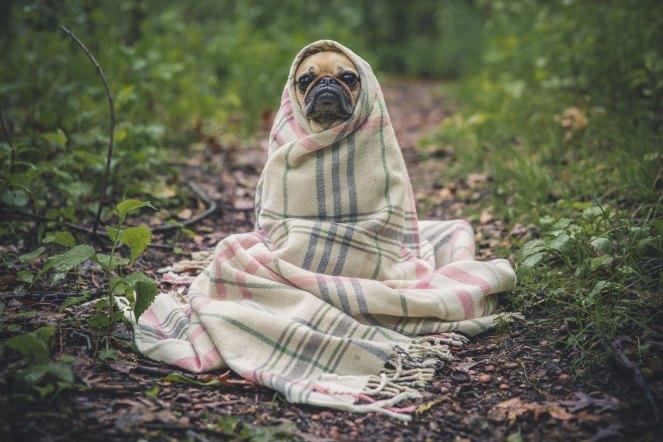 DogWearingSheet